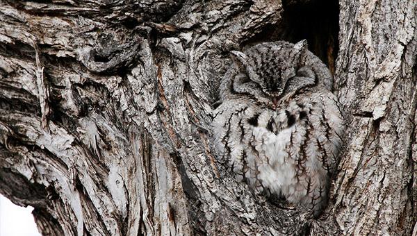 brilliant-owl-camouflage