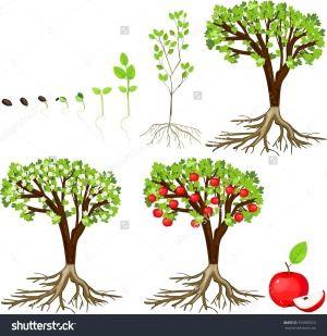 aid39175-728px-grow-an-apple-tree-from-a-se