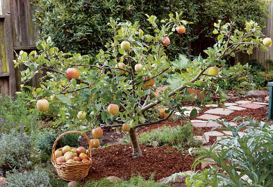 pruning-trees-jpg
