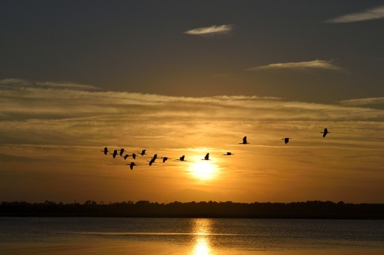 Sunset Florida Herons Flying Birds Avian Sky